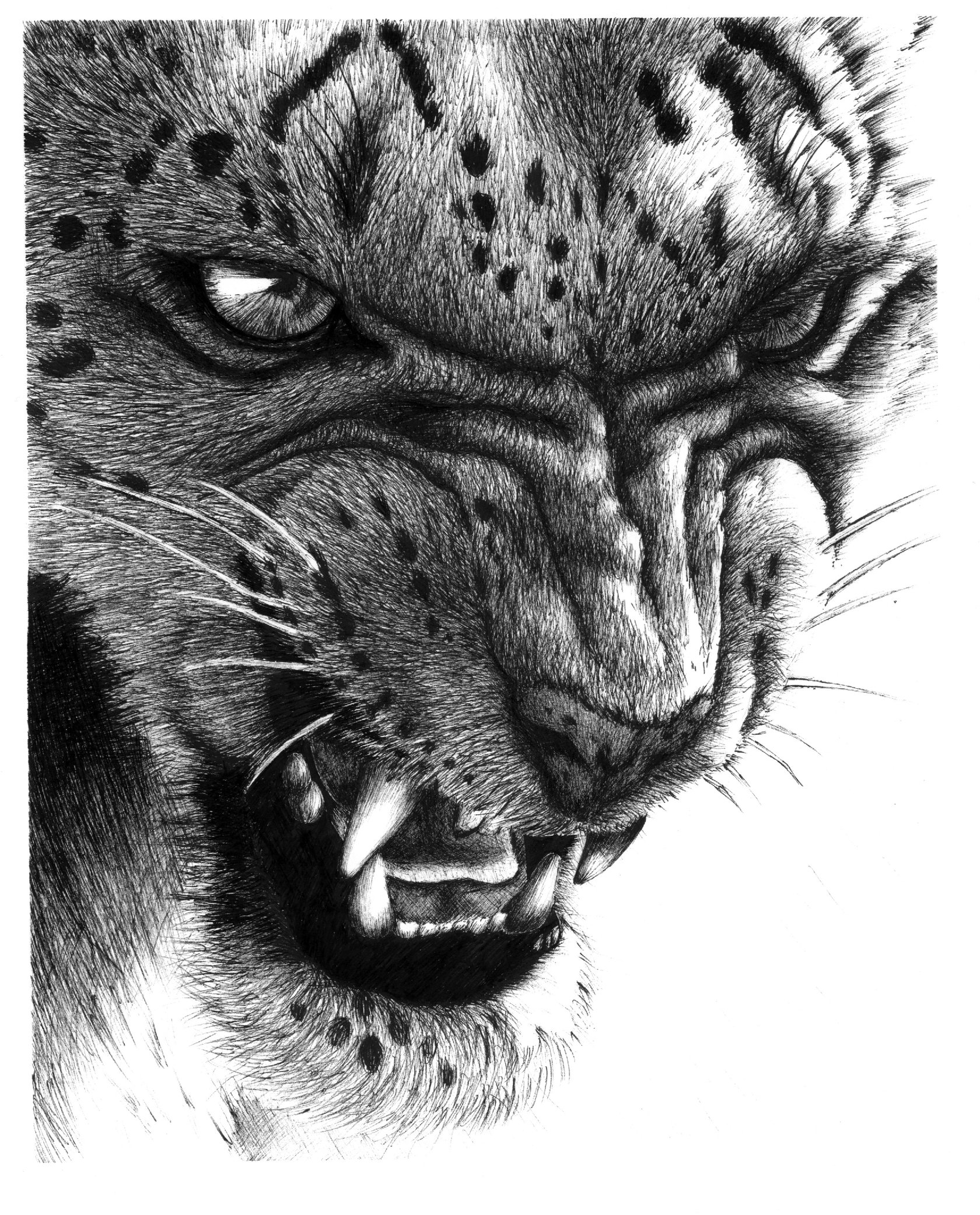 Drawn snow leopard deviantart Conchenn by Snow Leopard by