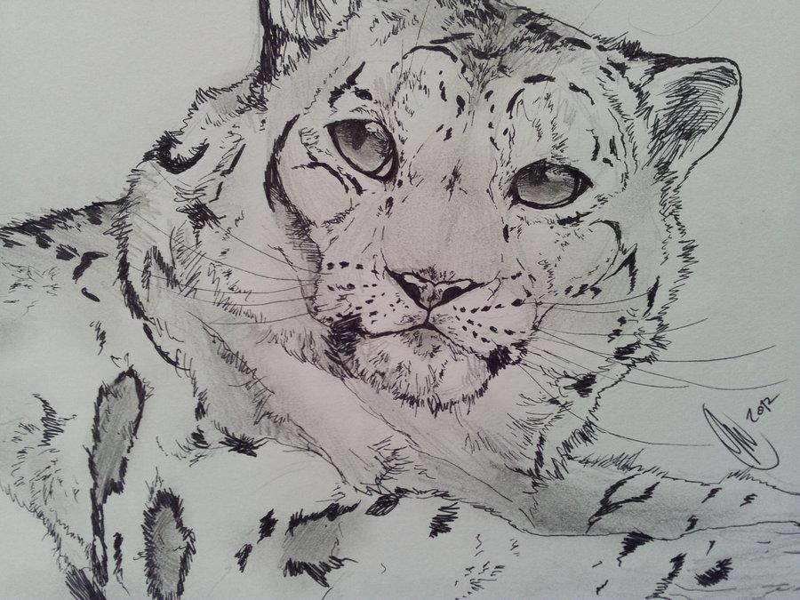 Drawn snow leopard deviantart By Snow Ziphora Sketches Leopard