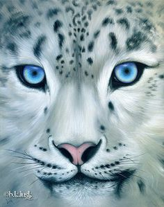 Drawn snow leopard eye Snow  leopard LEOPARD SNOW
