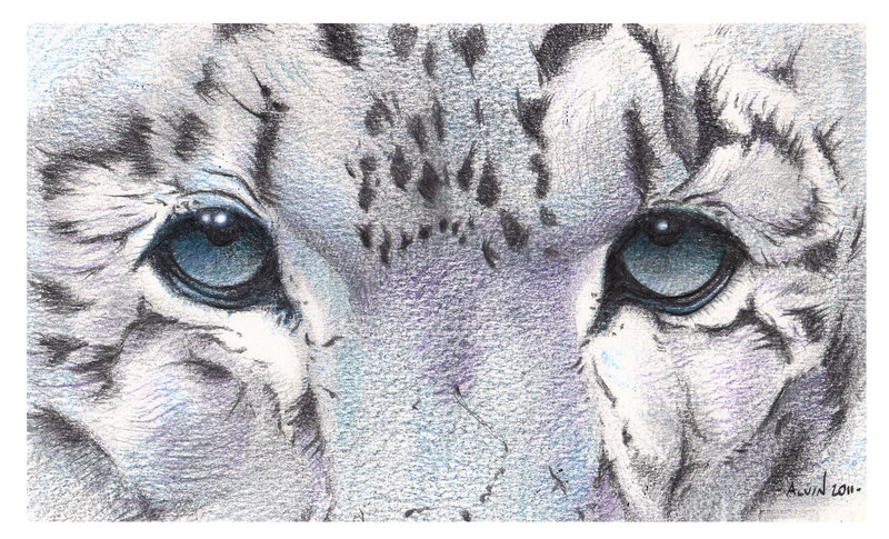 Drawn snow leopard eye Alvin Super by Close Snow