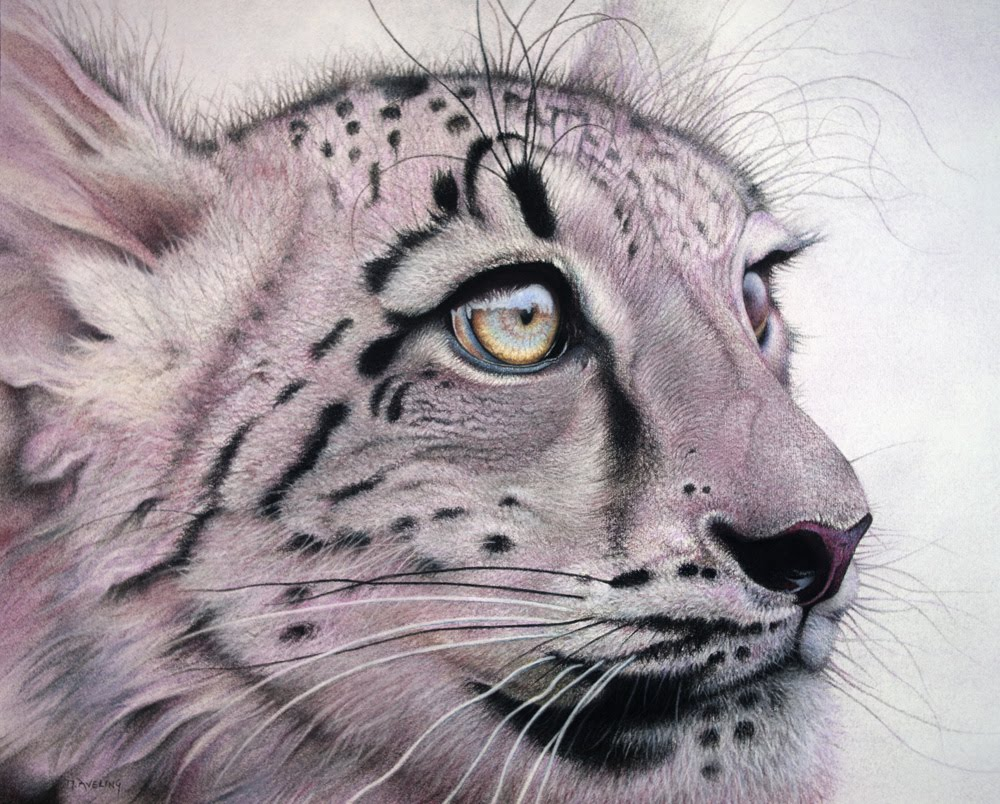 Drawn snow leopard eye