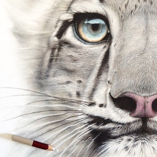 Drawn snow leopard eye A #SnowLeopard from #SnowLeopard by