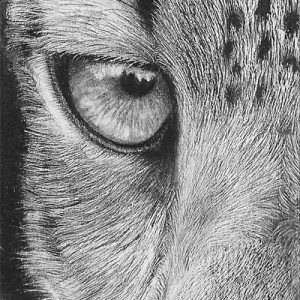 Drawn snow leopard eye Leopard  Drawing Original Right