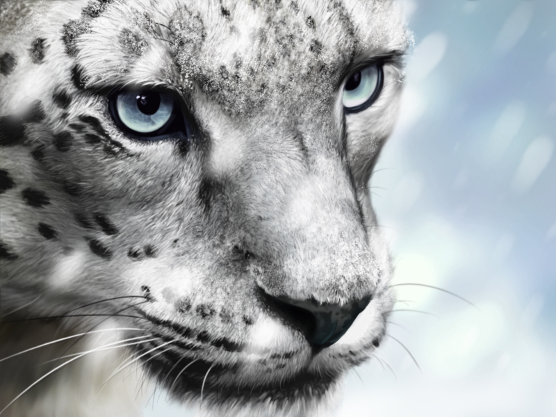 Drawn snow leopard eye Snow DeviantArt lazuri Snow ver