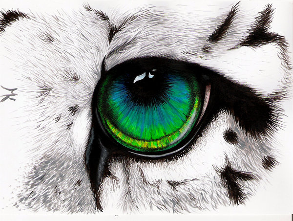 Drawn snow leopard eye Tarlanciel Snowleopard Snowleopard by Eye