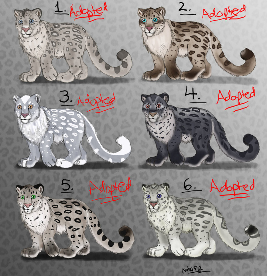 Drawn snow leopard eye Point DeviantArt Nala15 Male Adopts