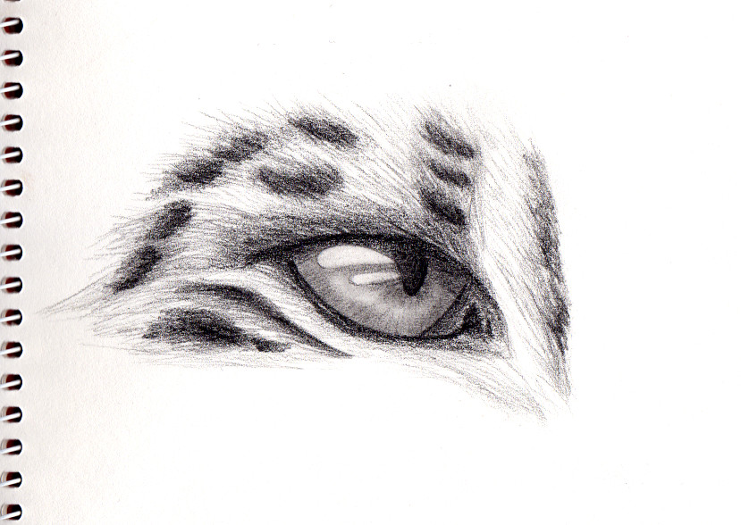 Drawn snow leopard eye Snow Bepo89 leopard's on 10