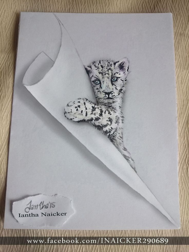 Drawn snow leopard funny Animal Pinterest cub paintings cat