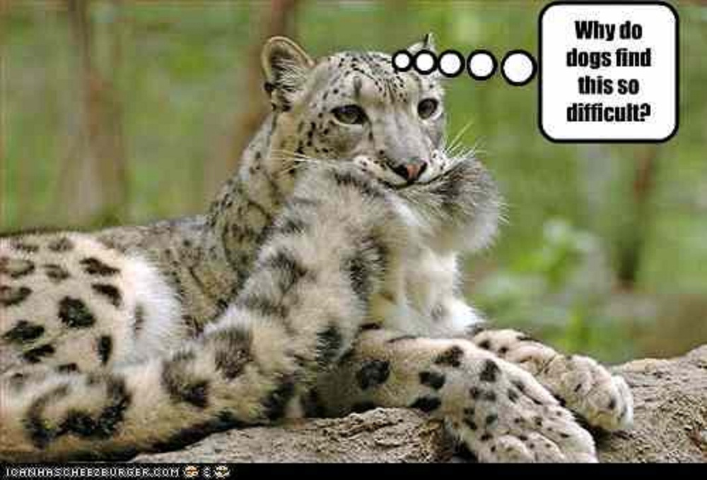 Drawn snow leopard funny Photos Snow The and The