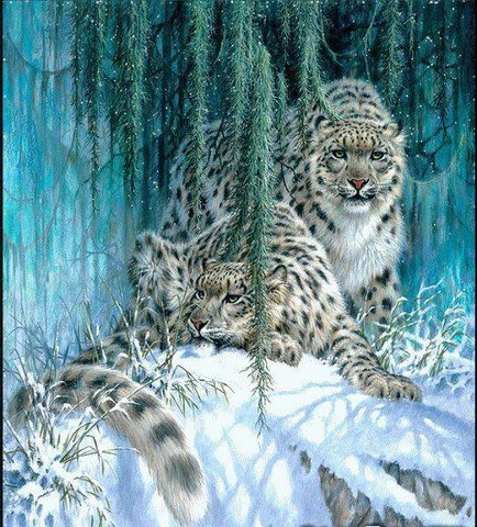 Drawn snow leopard funny Drawing or Funny and Snow
