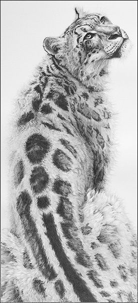 Drawn snow leopard fur Best Coloring leopard for volwassenen
