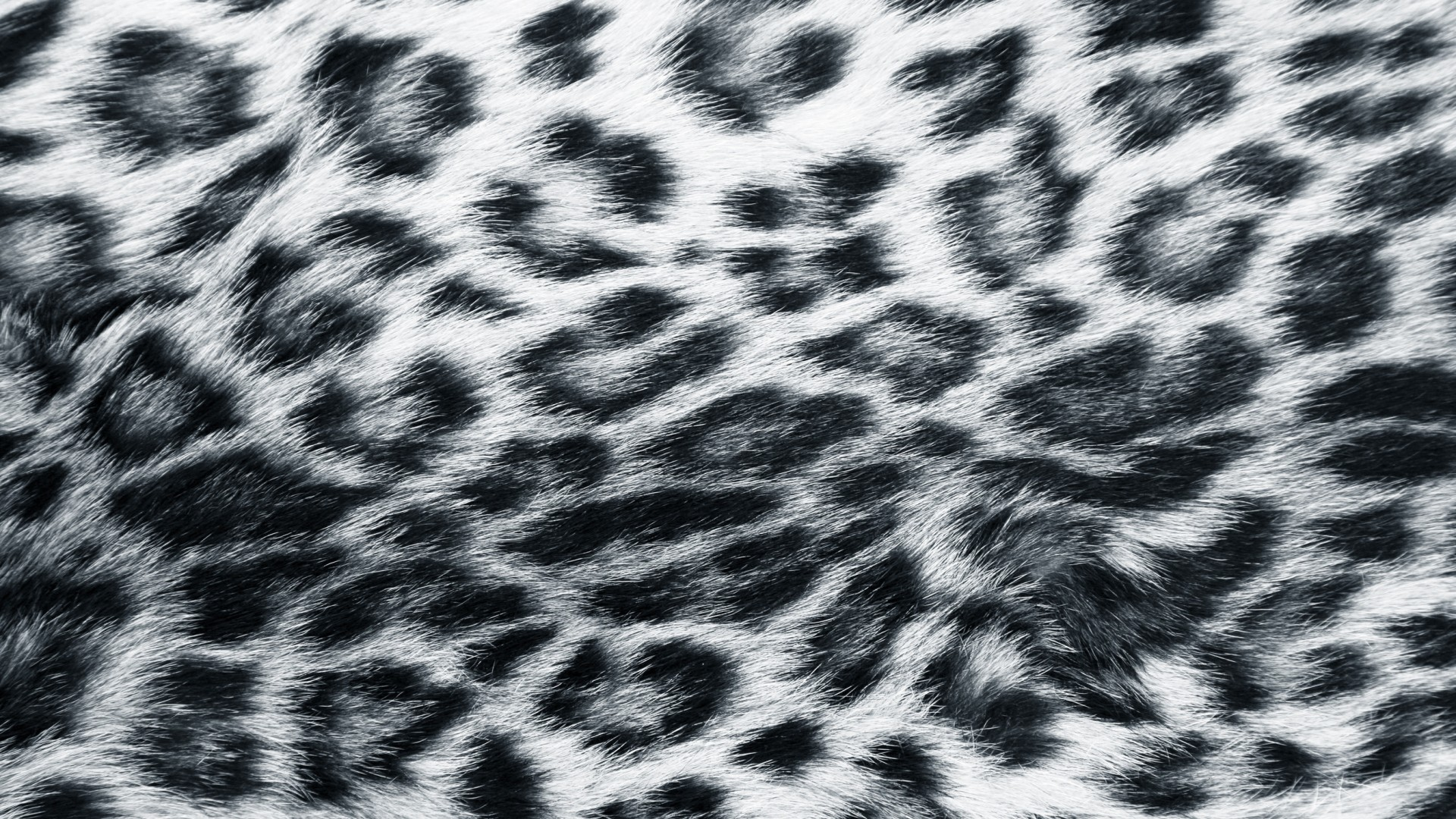 Drawn snow leopard fur Leopard snow Snow leopard Grafik