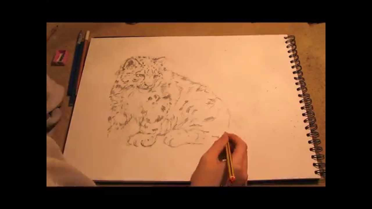 Drawn snow leopard fur Speed draw draw snow YouTube