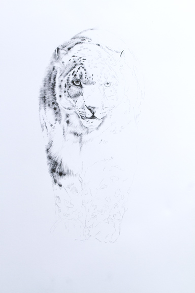 Drawn snow leopard fur Working own As The well
