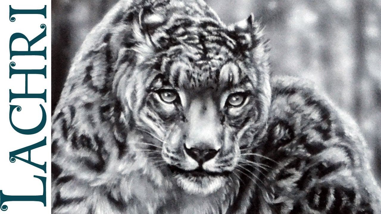 Drawn snow leopard fur YouTube How painting to leopard