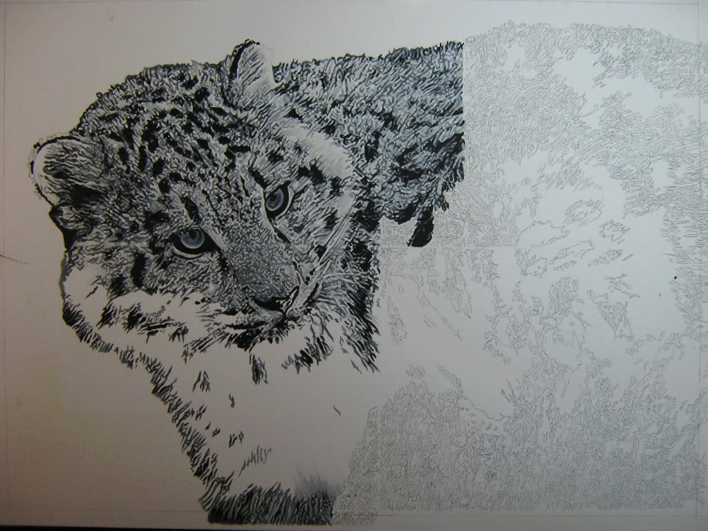 Drawn snow leopard fur Method a i error didn't