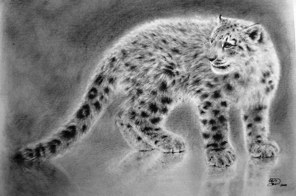 Drawn snow leopard ice Thin Ice Snow Leopard DeviantArt