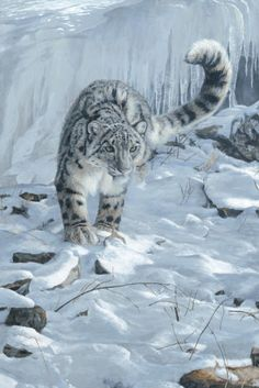 Drawn snow leopard ice Leopard by  Leonid Intent