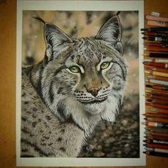 Drawn snow leopard lynx By Carol of Secrets AnimalsSnow
