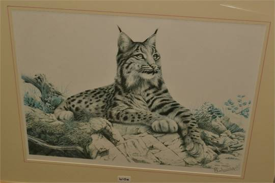 Drawn snow leopard lynx Snow stamp colour  48cm