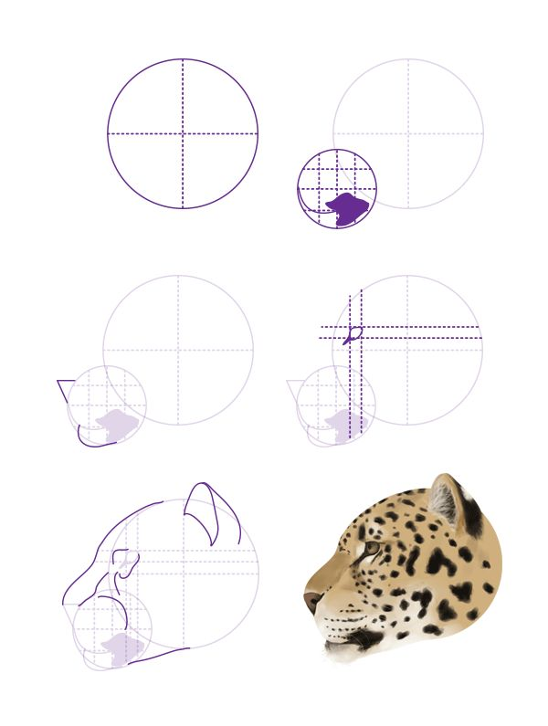 Drawn snow leopard mountain lion Images cheetahs and on snow