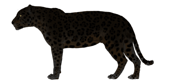 Drawn panther cat To and to and Cheetahs