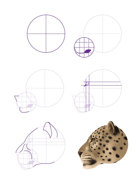 Drawn snow leopard mountain lion Tutorial cheetahs and we drawing