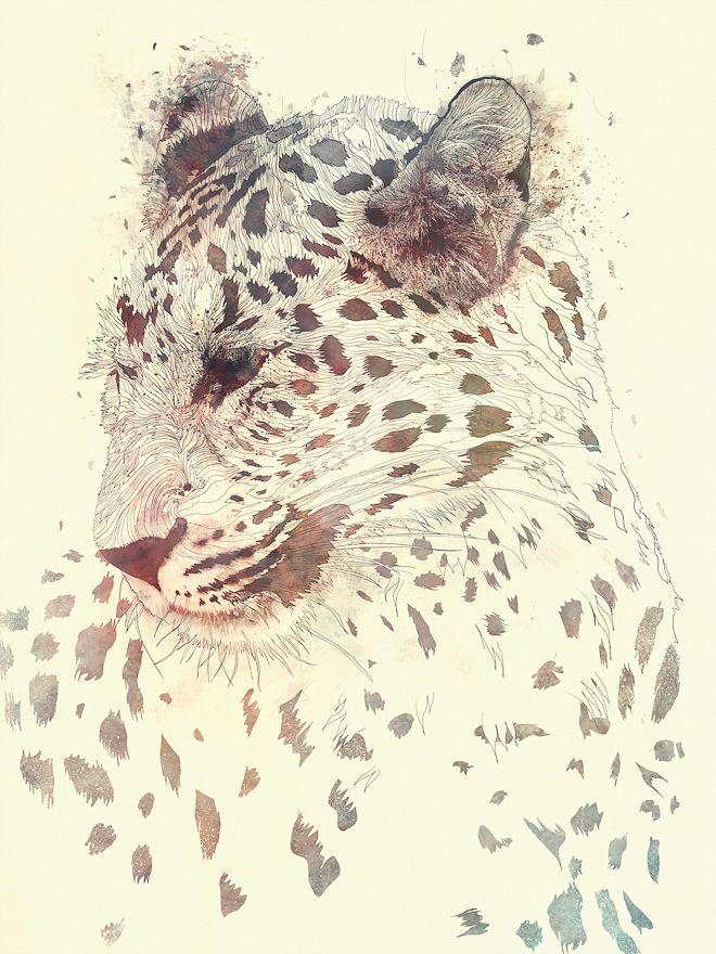 Drawn snow leopard pinterest On Khan Juxtaposé best images