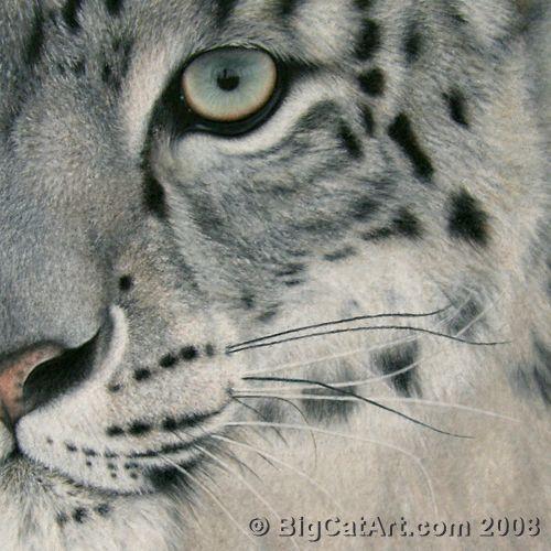 Drawn snow leopard pinterest 17 about painting enjoy images