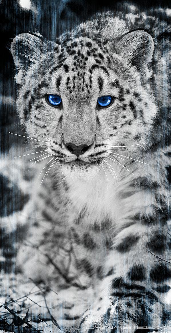 Drawn snow leopard pinterest Best leopard Leopard leopard Snow