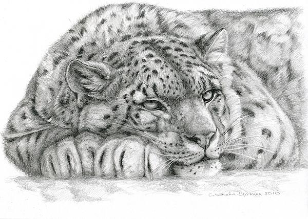 Drawn snow leopard pinterest Pinterest Larisa leopard  Waeyenberge