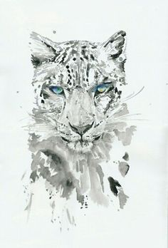Drawn snow leopard snow tiger Blue eyes Tiger Birdy with