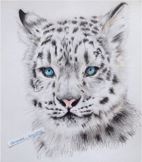 Drawn snow leopard snow tiger Drawing? snow What my think