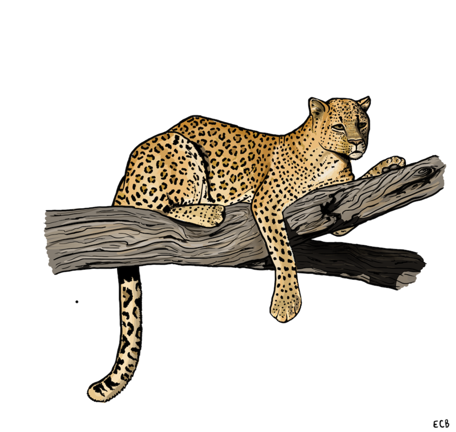 Drawn snow leopard tree drawing Kabar Draw Animals To Draw