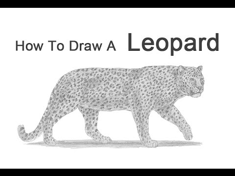 Drawn snow leopard tree drawing To Draw How Draw YouTube
