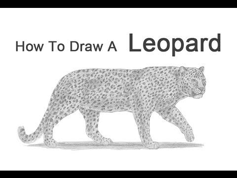 Drawn snow leopard tree drawing A Leopard Draw a How