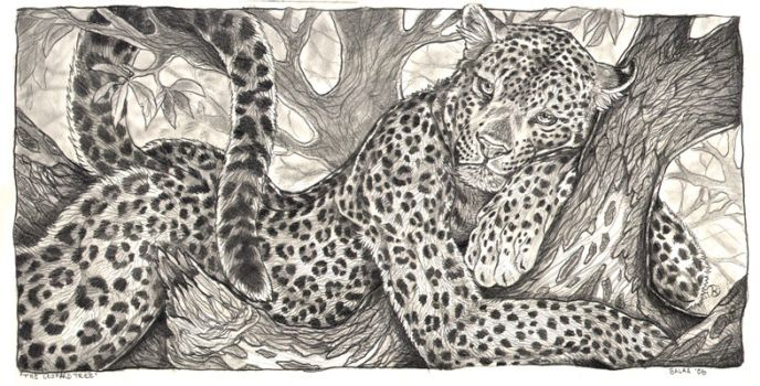 Drawn snow leopard tree drawing Panther Explore on 12 The