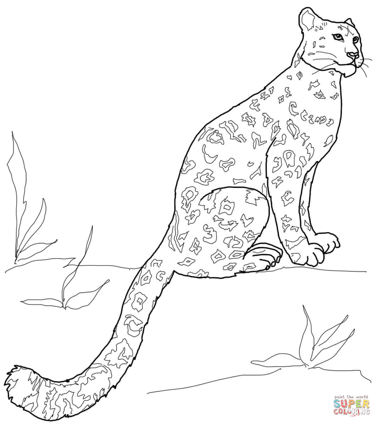 Drawn snow leopard tree drawing Leopard Sitting pages Coloring Leopards