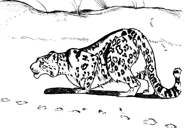 Drawn snow leopard tree drawing Coloring Leopard Sneaking Snow Sneaking