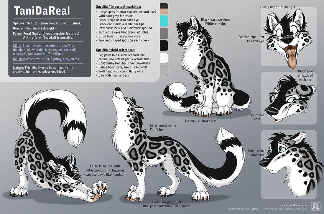 Drawn snow leopard wolf DeviantArt TaniDaReal Character TaniDaReal Tani