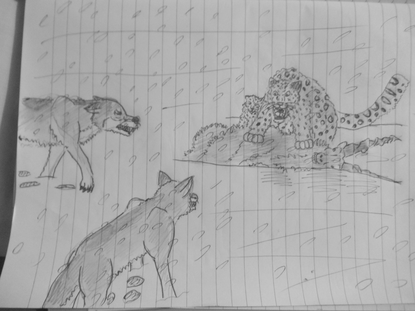 Drawn snow leopard wolf WDGHK DeviantArt vs Leopard Wolves