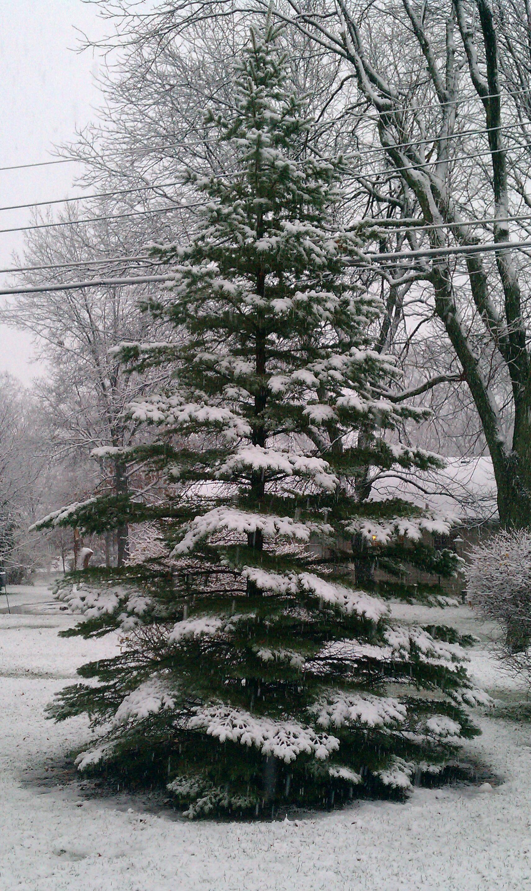 Drawn pine tree winter tree Tree door Snow door