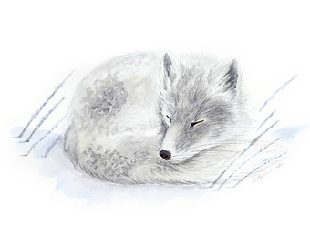 Polar Fox clipart printable Arctic Etsy Fox fox Nursery