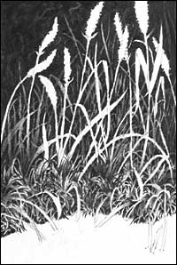 Drawn grass charcoal An Drawing Negative Drawing Negative