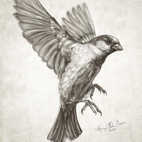 Drawn sparrow For 20+ Cramer #drawing new