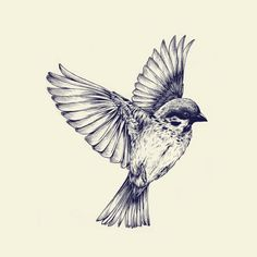Drawn sparrow Don't We 6:26 They plant