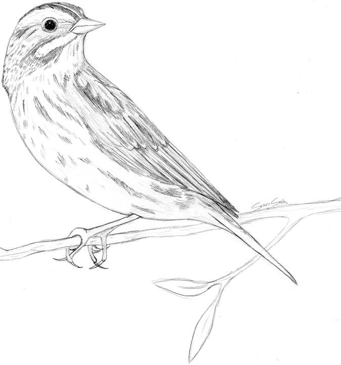 Drawn sparrow Images Art Drawing Art Sparrow