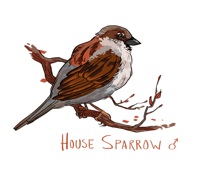 Drawn sparrow Sparrow Drawing Simple Simple photo#18