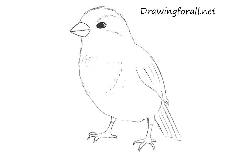 Drawn sparrow Step sparrow to by How