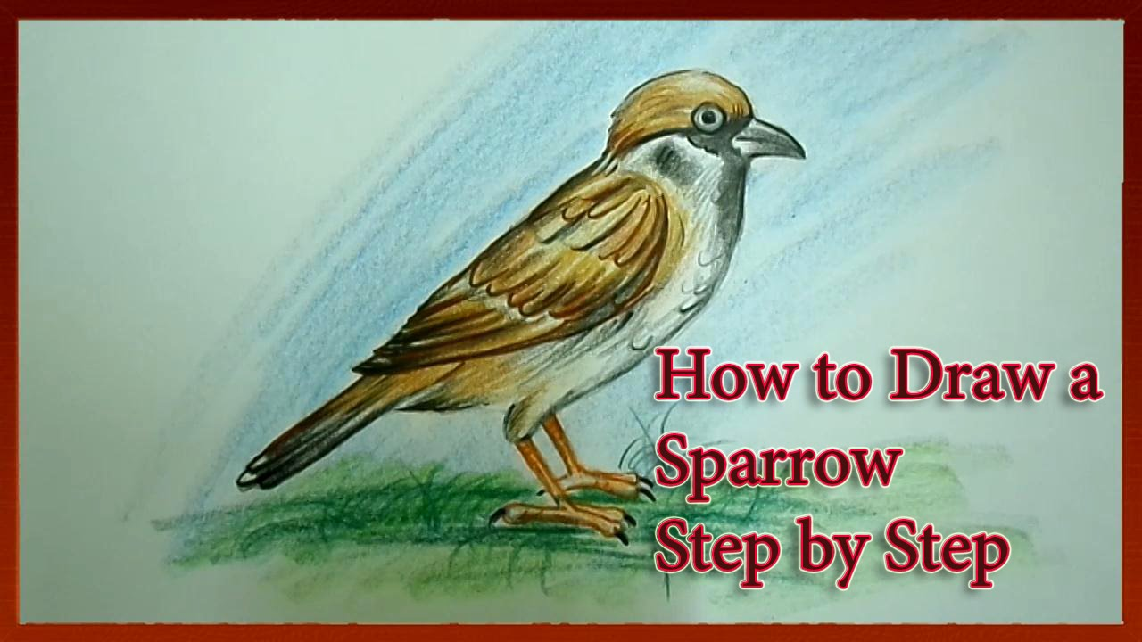 Drawn sparrow detailed YouTube Draw to Draw Sparrow